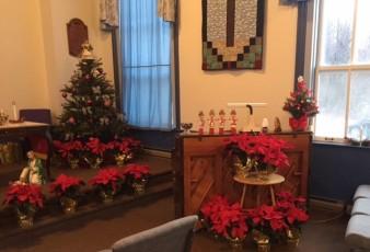 poinsettias-christmas-2016-2