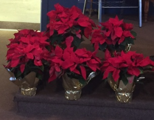 poinsettias-christmas-2016